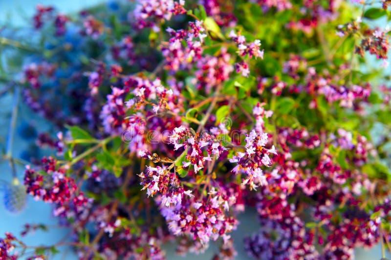 bouquet of oregano closeup stock image
