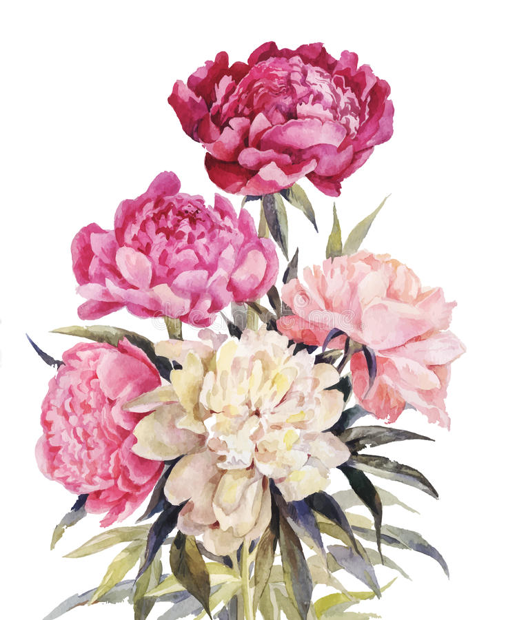 Bouquet of peonies watercolor.Iillustration for vintage greeting royalty free stock photos