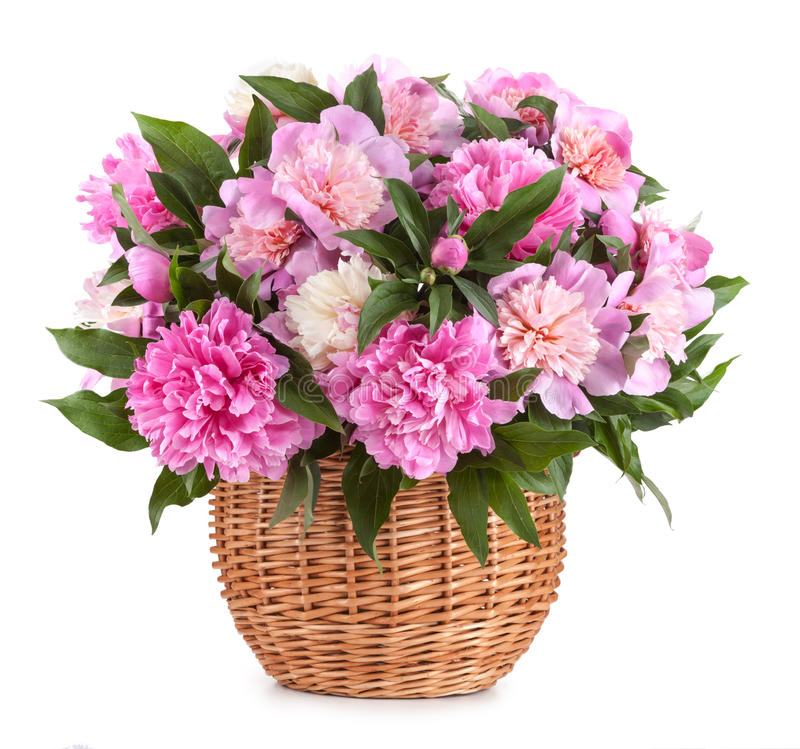 Bouquet peons in a basket isolated on a white background stock image