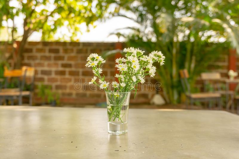 Bouquet of petite pure white petals of Chrysanthemum tea or Flower tea blossom in a glass vase on grey concrete table in a garden stock photo