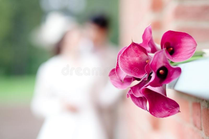 Bouquet of pink callas. On a blurred background of a young couple royalty free stock image