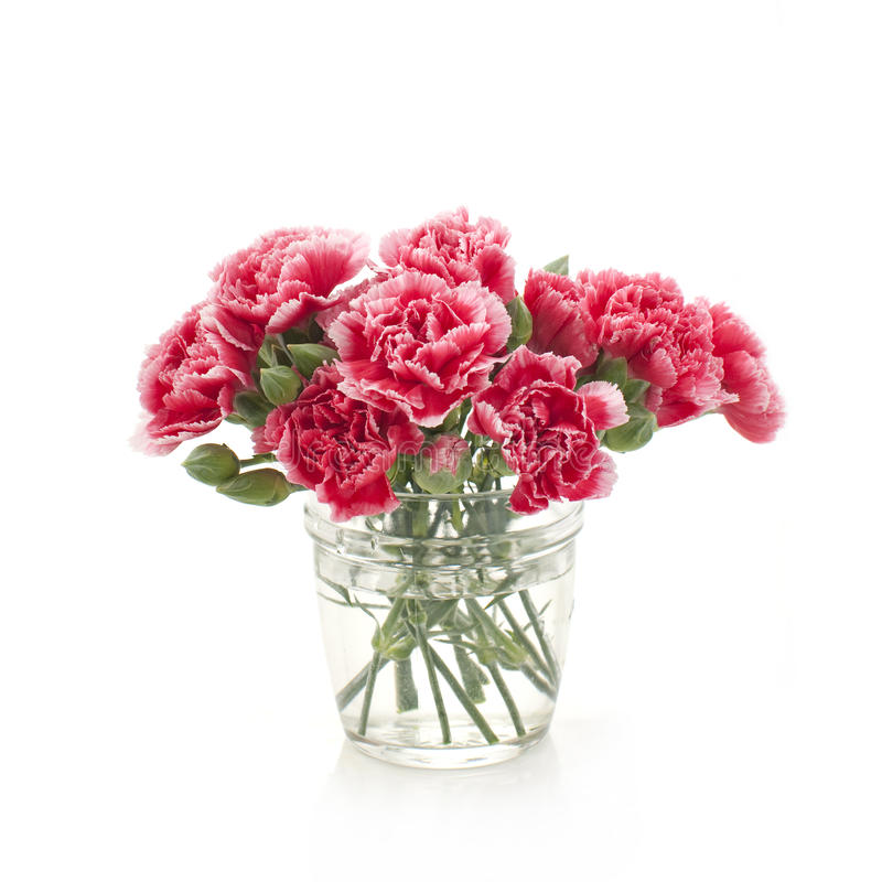 Bouquet of pink carnation flowers royalty free stock photography