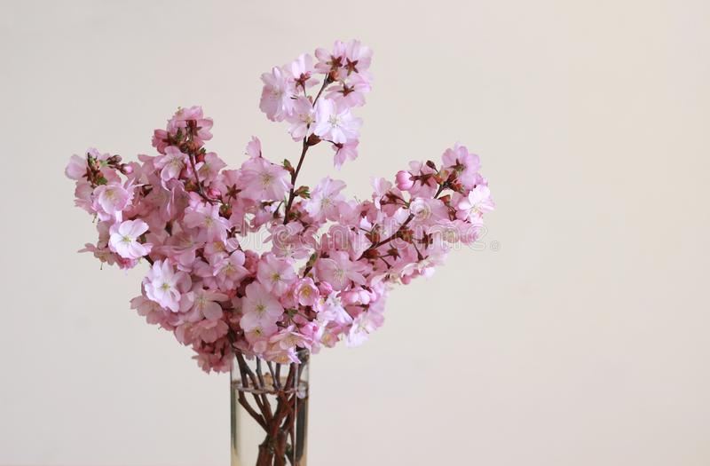 Bouquet with pink cherry blossoms in a vase, floral background. Bouquet with pink cherry blossoms in a glass vase, bright floral background with copy space royalty free stock image