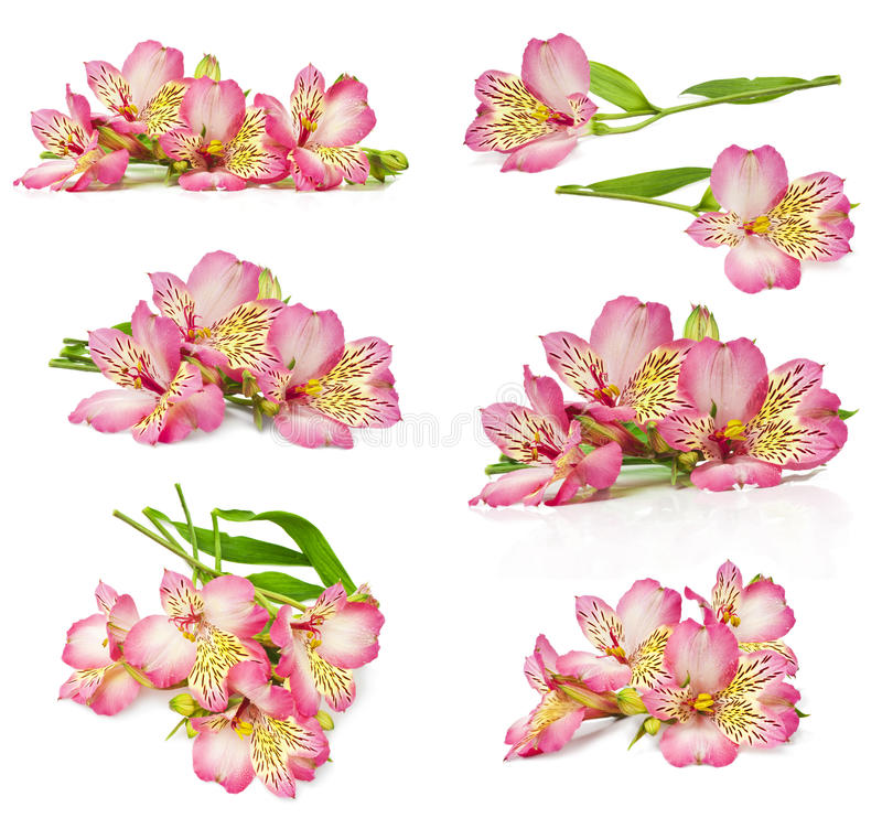 Bouquet of pink flowers royalty free stock images