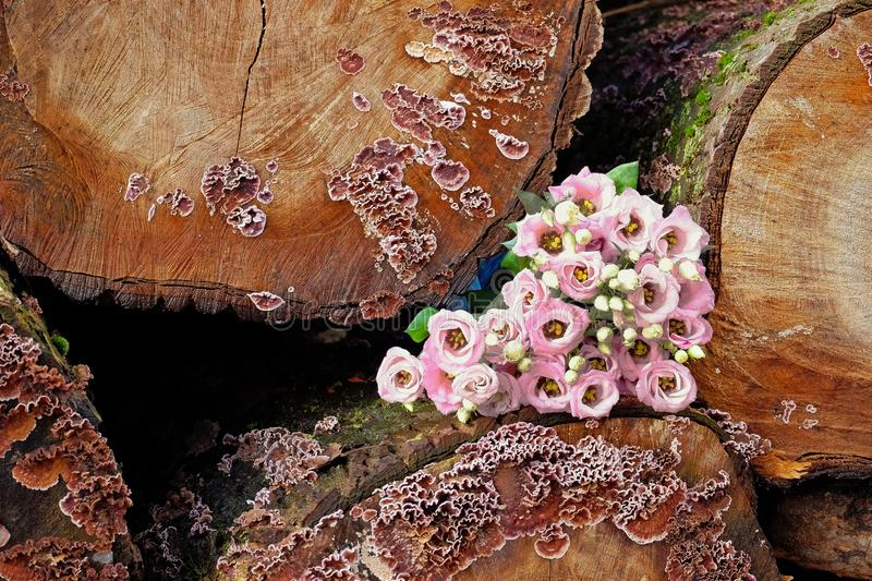 Bouquet of pink flowers in tree trunks. Bridal bouquet of pink flowers in tree trunks with mushrooms royalty free stock images