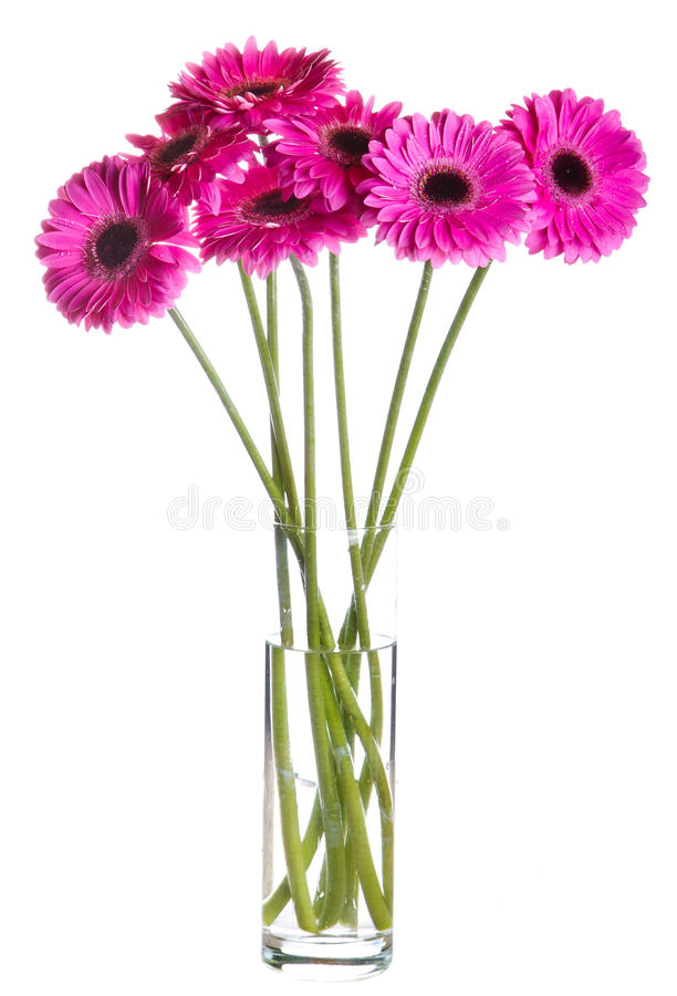 Bouquet of pink Gerbera flowers royalty free stock photography