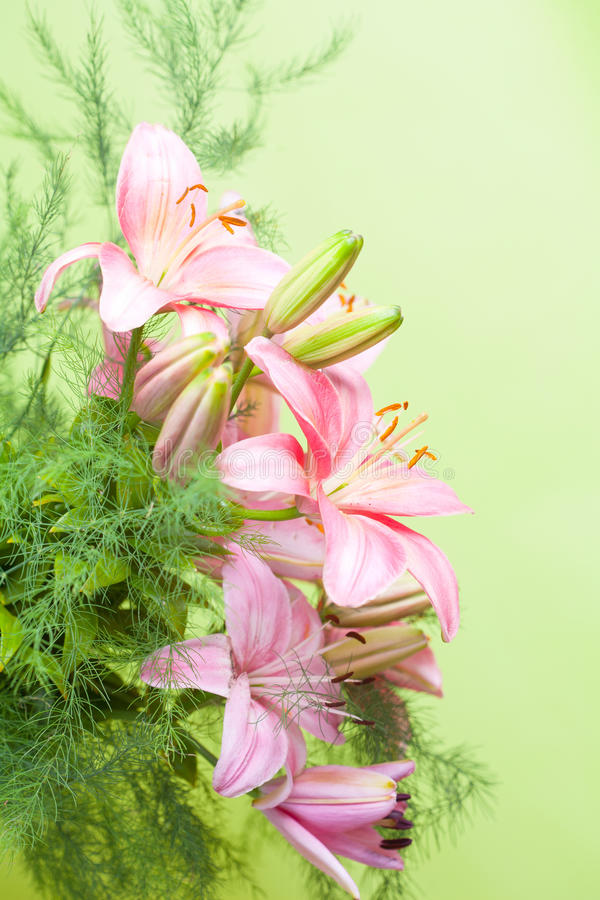 Bouquet of pink lilies stock photography