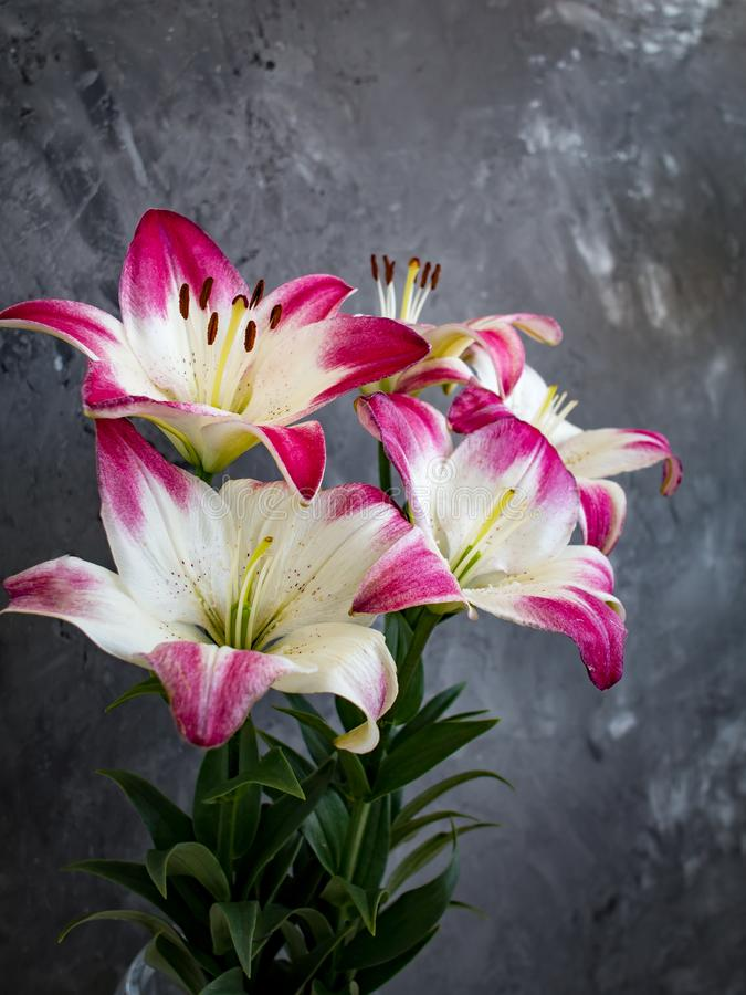 Bouquet of pink lilies on gray backdrop, valentine compliment stock images