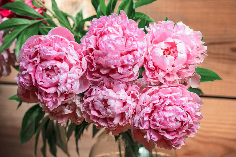 Bouquet of pink Peonies. royalty free stock images