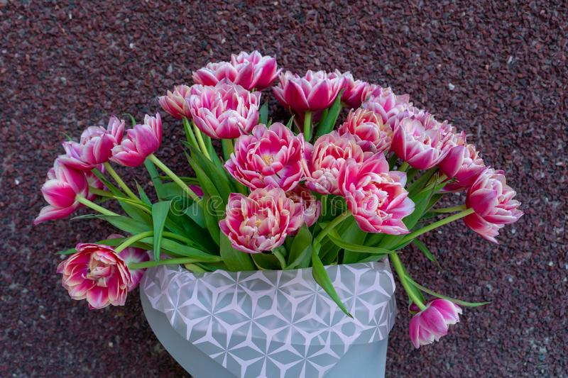 A bouquet of pink red white double peony tulips in a gray modern packaging on a red background. Happy mothers day. International royalty free stock photos