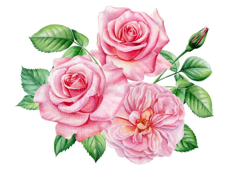 Bouquet Pink Rose, Beautiful Flower On Isolated White