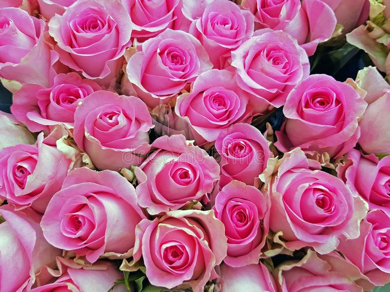 Beautiful bouquet of pink roses stock photography