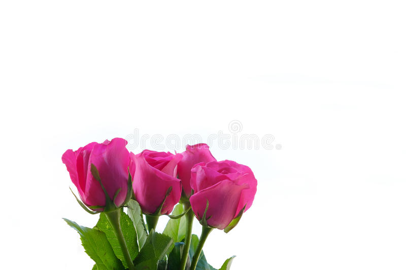 Bouquet of pink roses. royalty free stock photos