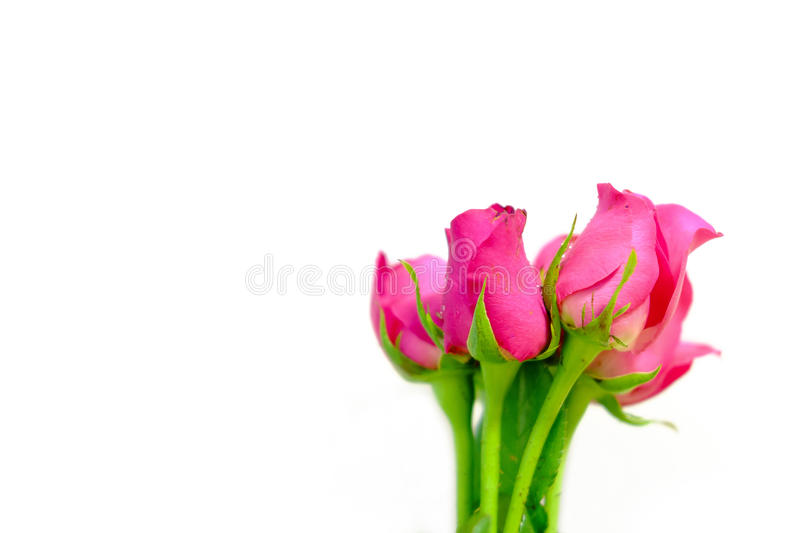 Bouquet of pink roses. stock photo