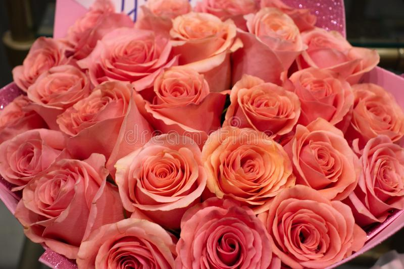 Bouquet of pink scarlet roses close-up. Background and copy space. Gift for Valentine`s Day. Romantic concept royalty free stock photos