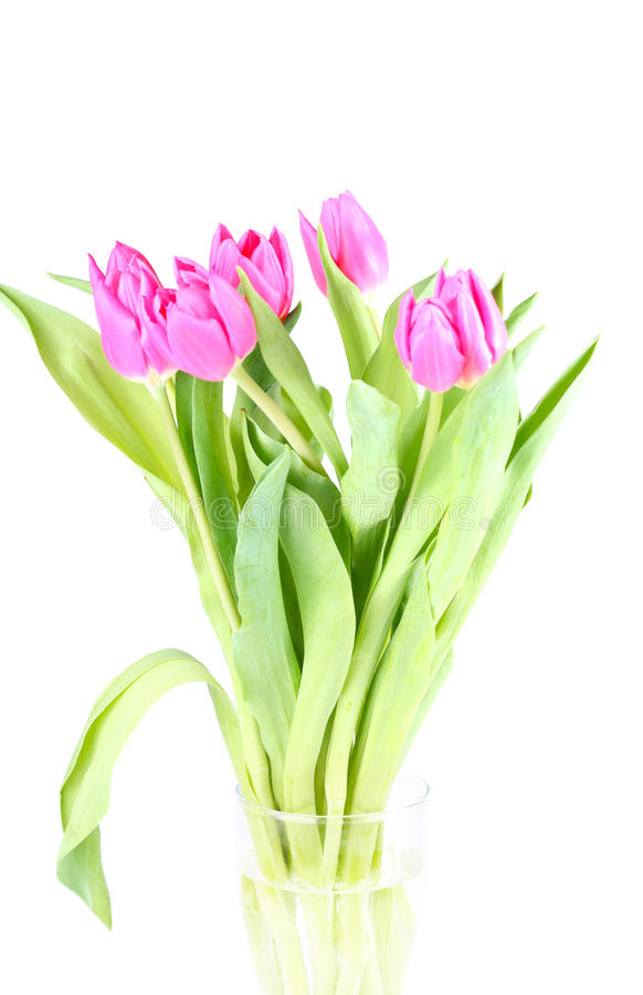 Bouquet of pink tulips stock photos