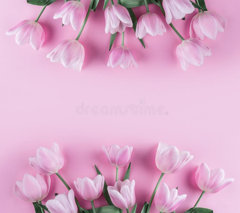 Bouquet of pink tulips flowers on pink background. Waiting for spring. Card for Mothers day, 8 March, Happy Easter. Greeting card. Or wedding invitation. Flat royalty free stock image