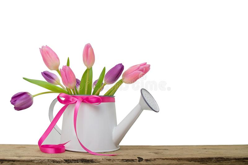 Bouquet of pink tulips in garden watering can with ribbon isolated on white background stock photos