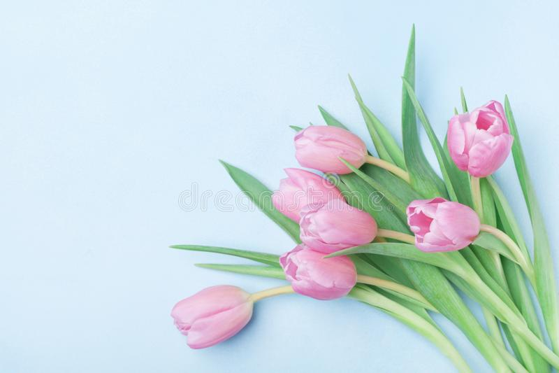 Bouquet of pink tulips for March 8, International Womans or Mothers day. Beautiful spring card. Top view. Bouquet of pink tulips for March 8, International royalty free stock images