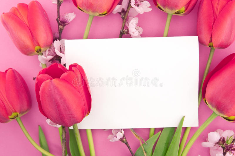 Bouquet of pink tulips and spring flowers on pink background. With empty card for greeting message. Mother's Day and spring background concept stock photography