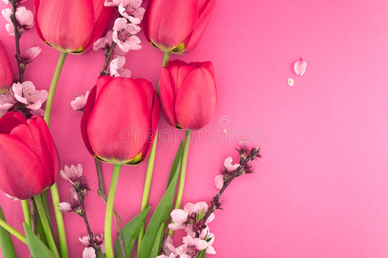 Bouquet of pink tulips and spring flowers on pink background. With space for greeting message. Mothers Day and spring background concept stock photos
