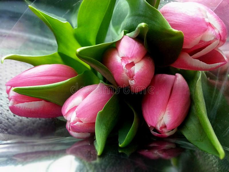 Bouquet of pink tulips on the table stock images