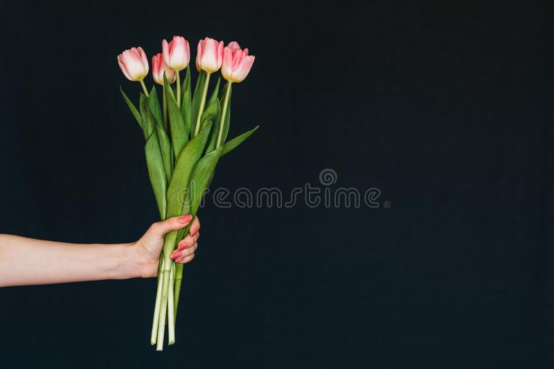 Bouquet of pink tulips in a woman`s hand stock photography
