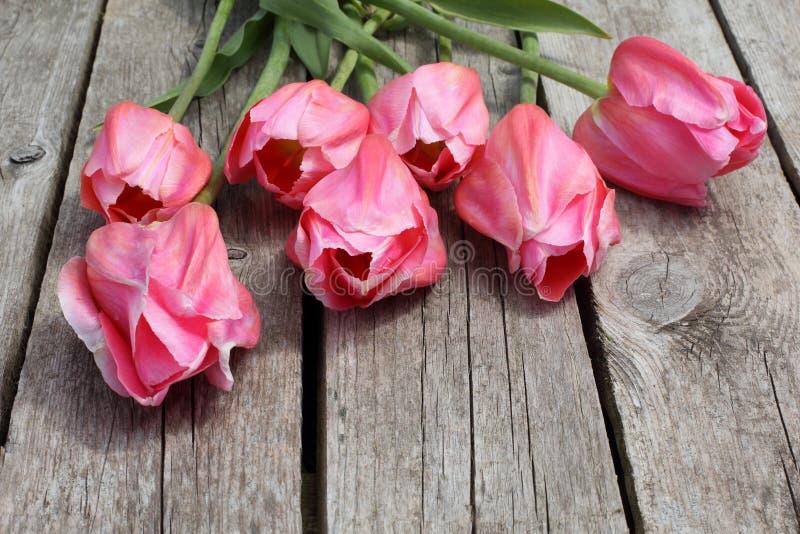 Macro of Beautiful Pink Tulips royalty free stock photos