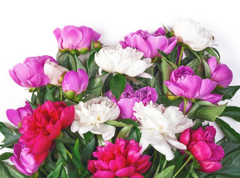 Bouquet of pink and white peonies isolated on white background. Flat lay. Bouquet of pink and white peonies isolated on white background. Top view. Flat lay stock photo