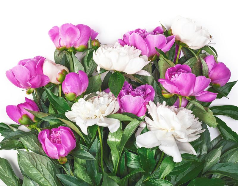 Bouquet of pink and white peonies isolated on white background. Flat lay. Bouquet of pink and white peonies isolated on white background. Top view. Flat lay royalty free stock image
