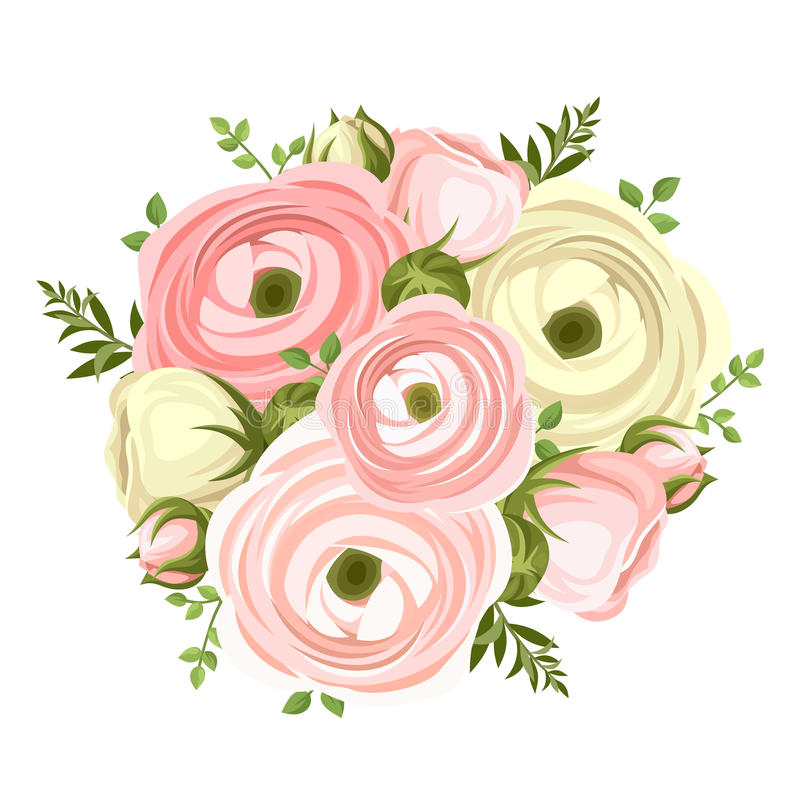 Bouquet of pink and white ranunculus flowers. Vector illustration. stock illustration