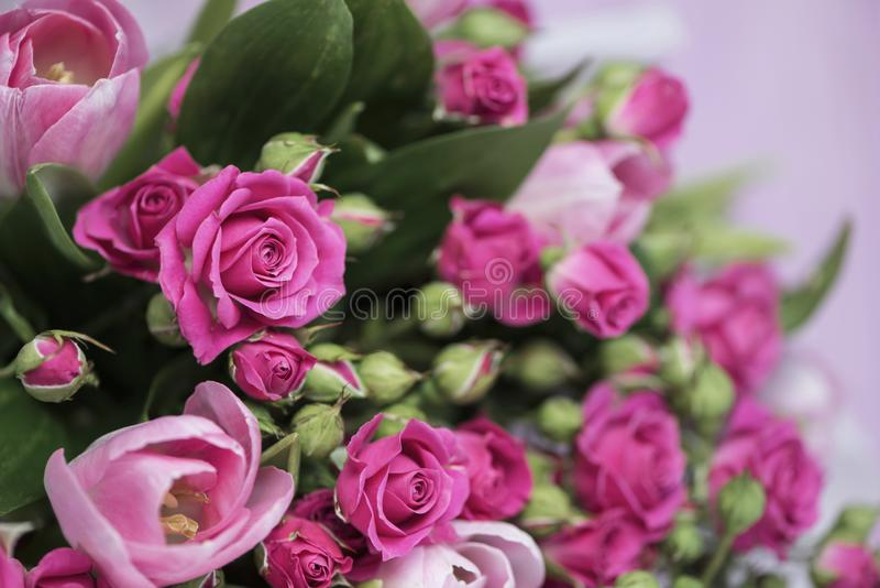 Bouquet of pink wild rose and pink tulip royalty free stock images