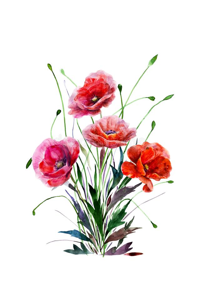 Bouquet of poppy flowers. Hand drawn watercolor illustration. Four red colors flowers. Elements for design isolated on white. vector illustration
