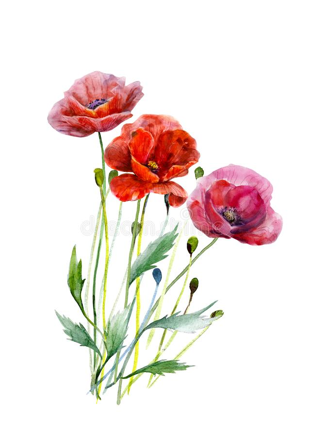 Bouquet of poppy flowers. Hand drawn watercolor illustration. Three red colors flowers leaves and stalks. royalty free illustration