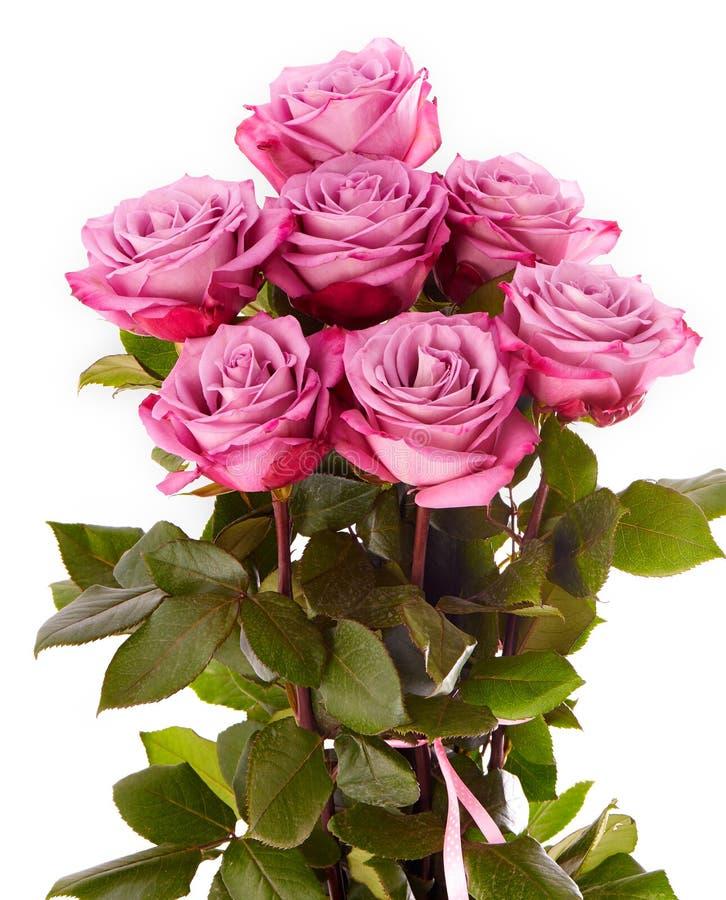 Bouquet pourpre de roses sur un fond blanc photographie stock