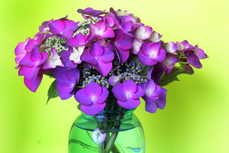 Bouquet Pretty Purple Lacecap Hydrangea royalty free stock photography