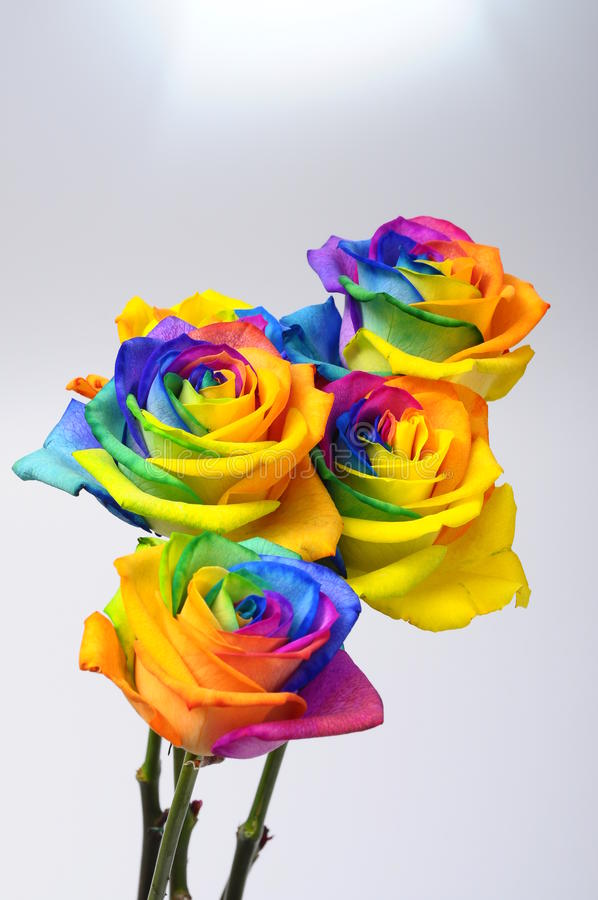 Bouquet of Rainbow rose stock image. Image of wallpaper - 36194999