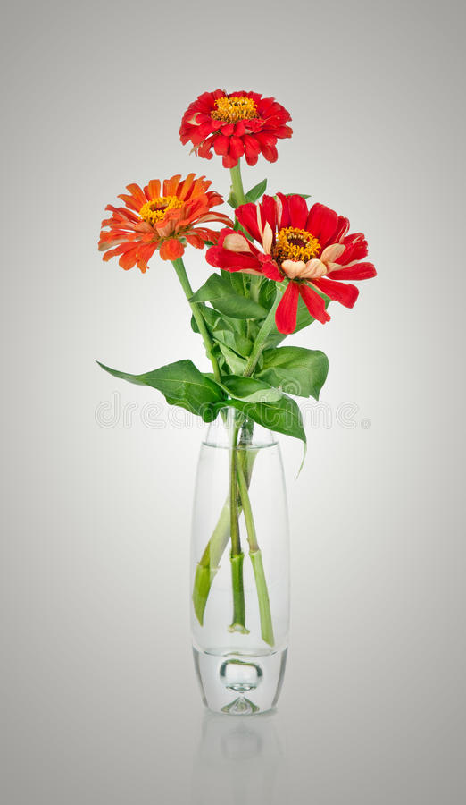 Bouquet from red daisy-gerbera in glass vase stock photos