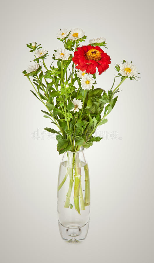 Bouquet from red daisy-gerbera and white aster in glass vase royalty free stock photo