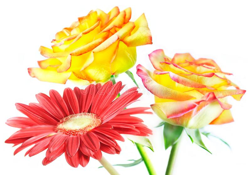 Bouquet of red gerbera and two yellow roses on green stems. Is on a white background royalty free stock photography