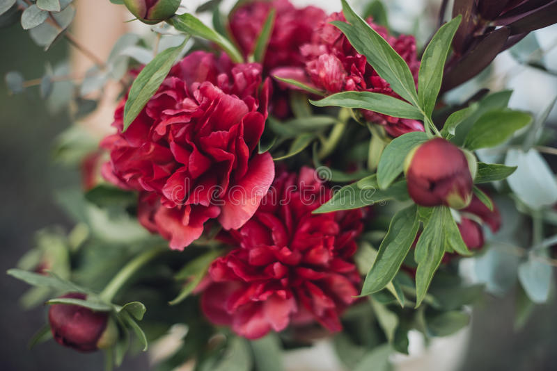 Bouquet of red peonies stock photo