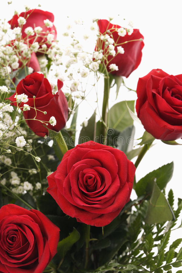 Bouquet of red roses. Close-up of bouquet of long-stemmed red roses with baby's breath against white background stock photography
