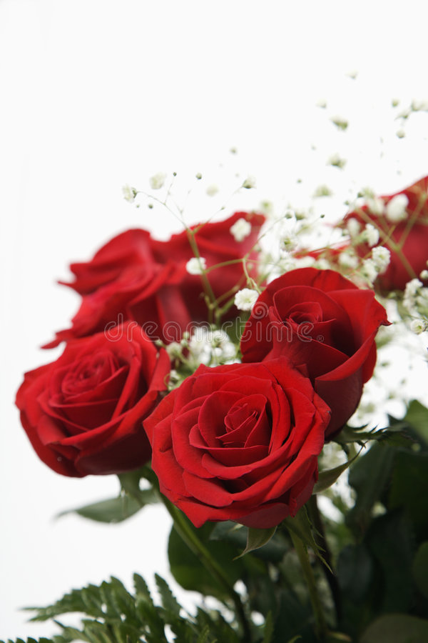 Bouquet of red roses. Bouquet of long-stemmed red roses with baby's breath against white background stock photos