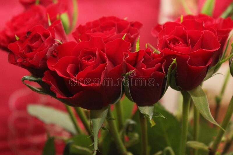 Bouquet Of Red Roses Free Public Domain Cc0 Image