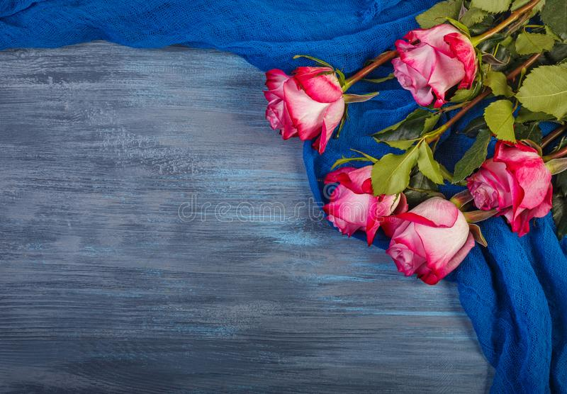 Red roses on a blue background royalty free stock image