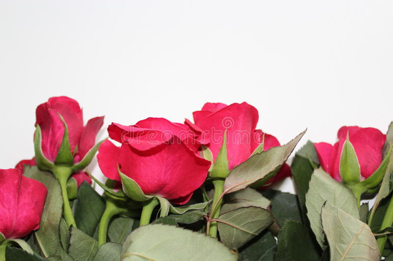 A bouquet of red roses at the bottom of the photo. stock photography
