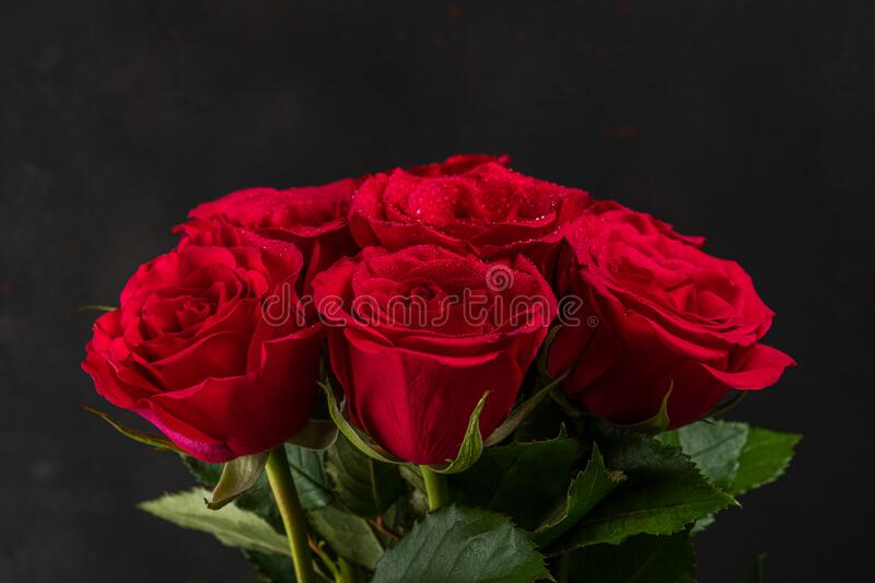 Bouquet of red roses on dark background. Greeting card for Valentines Day, Womens Day. Holiday concept.  royalty free stock photos