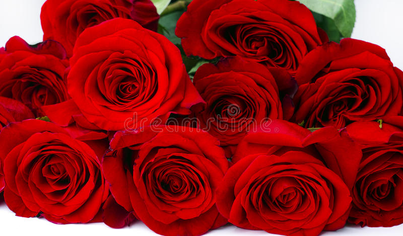 Bouquet of red roses on white background stock images