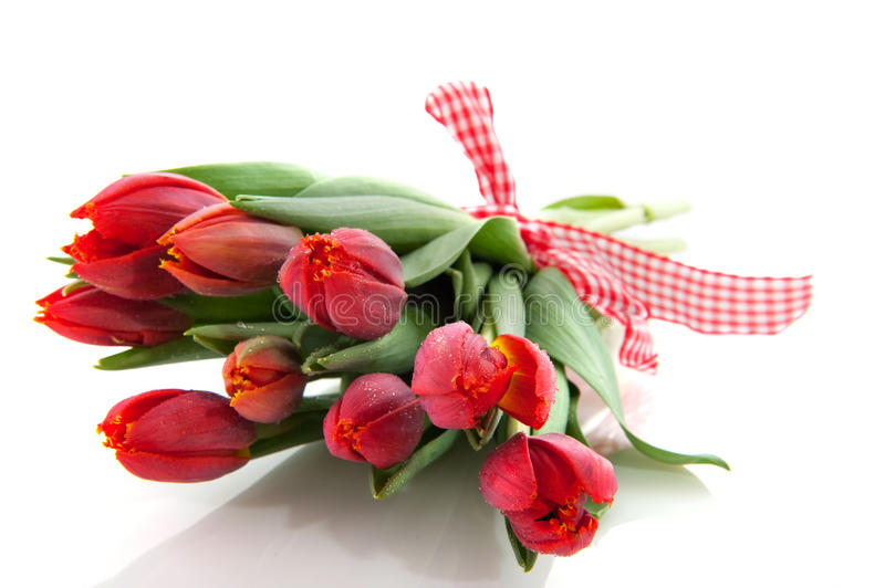 Bouquet red tulips royalty free stock photos
