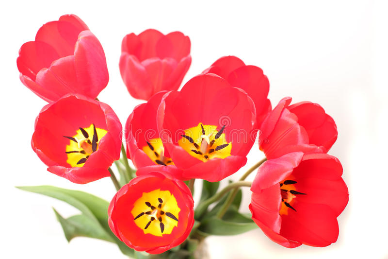 Download Bouquet Of Red Tulips Stock Image - Image: 20809201